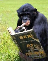 Chimp Reading Sex at Dawn